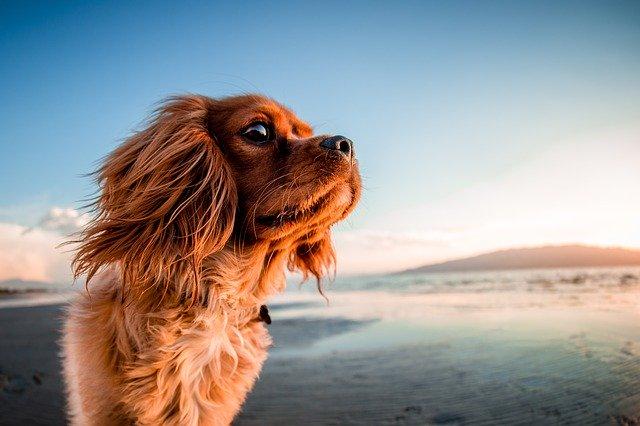 spiagge a tema per cani